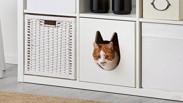 Кошкин дом, спрятанный в комоде