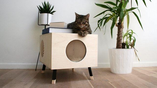 Кот на тумбе с круглым отверстием