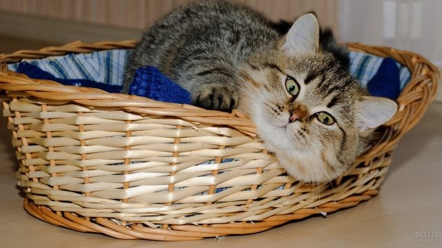 Кот свесил морду с плетёной корзины
