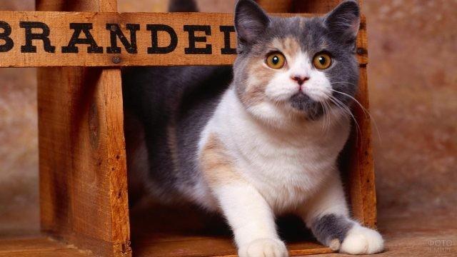Кот в деревянном домике с надписью