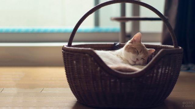 Кот в плетёной корзине