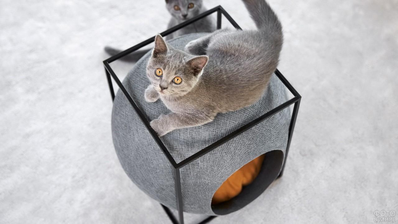 Котята вокруг современного домика