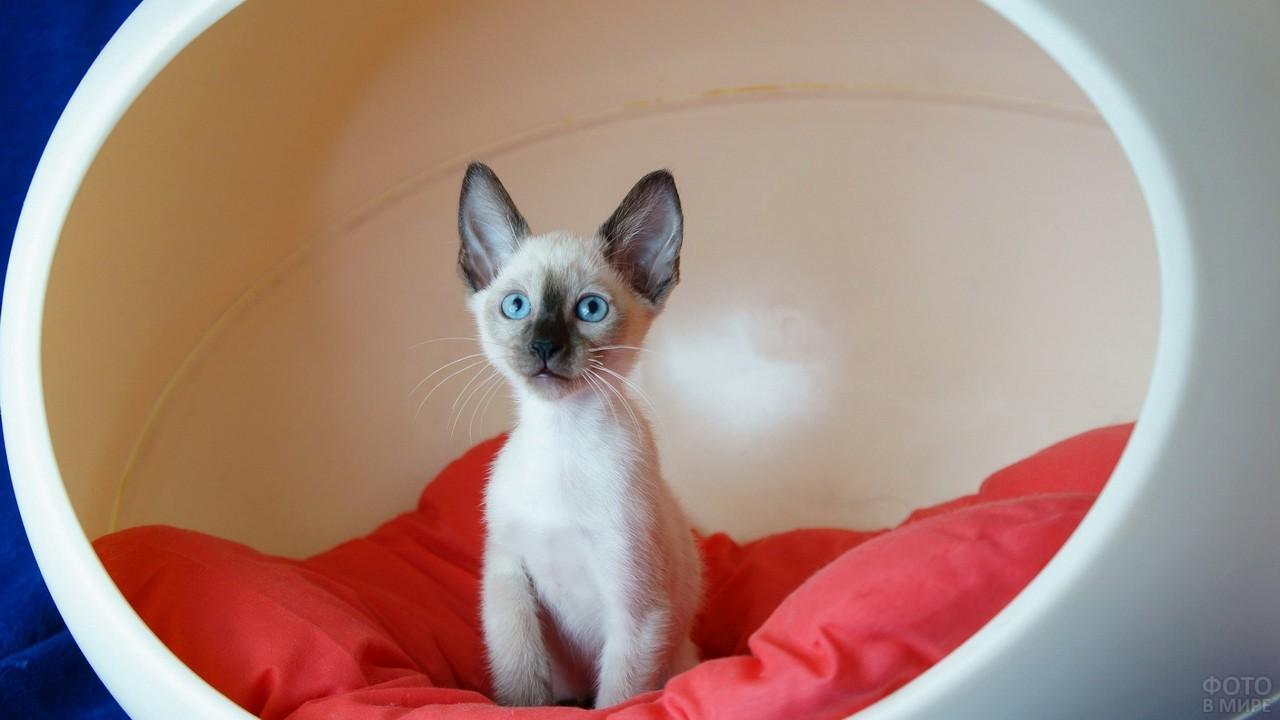 Котёнок в домике-капсуле