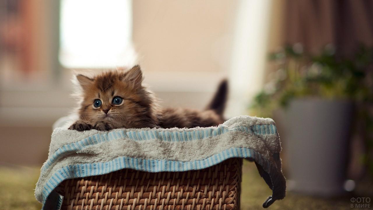 Котёнок в плетёной лежанке