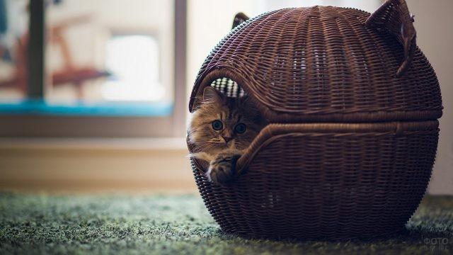 Плетённый домик в виде шара