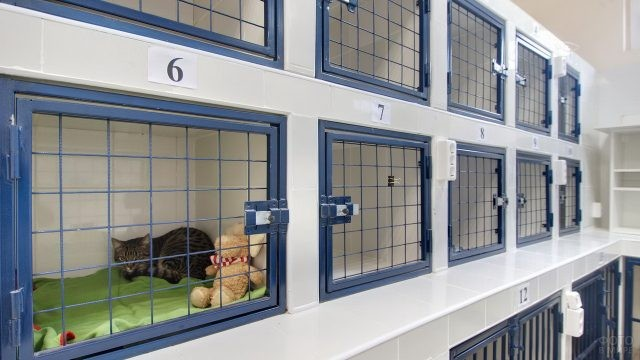 Ветеринарные клетки для животных
