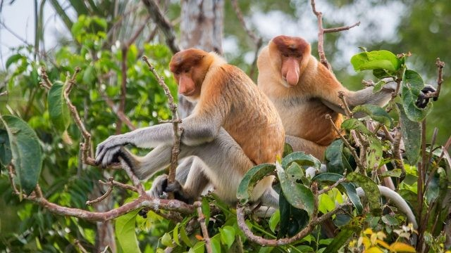 Две обезьяны сидят на дереве