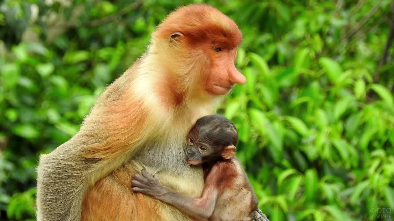 Малыш носач обнимает маму