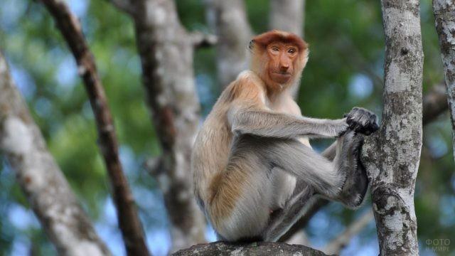 Самка породы носач сидит на дереве