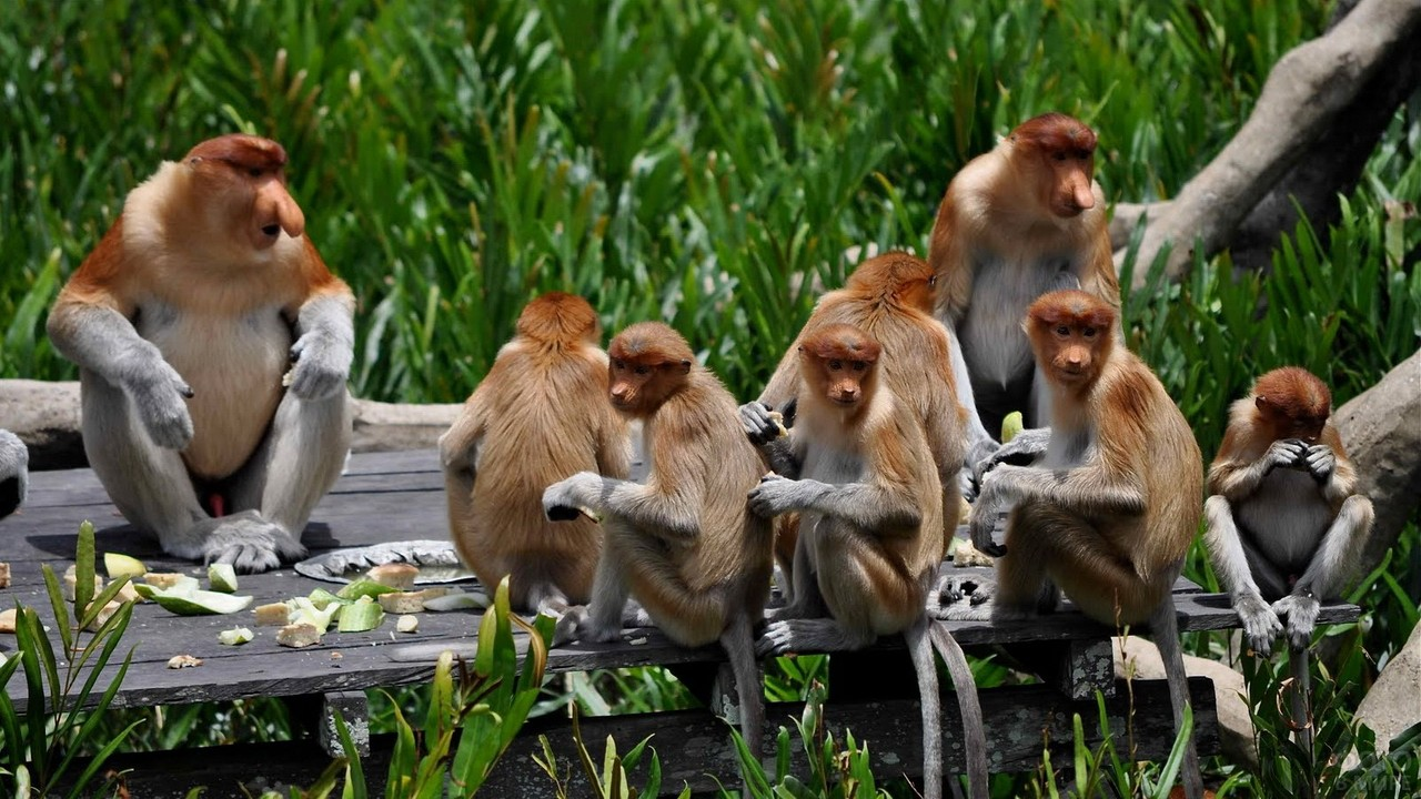 Стая обезьян трапезничает