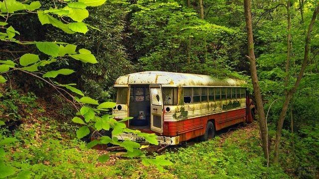 Заброшенный автобус в лесу