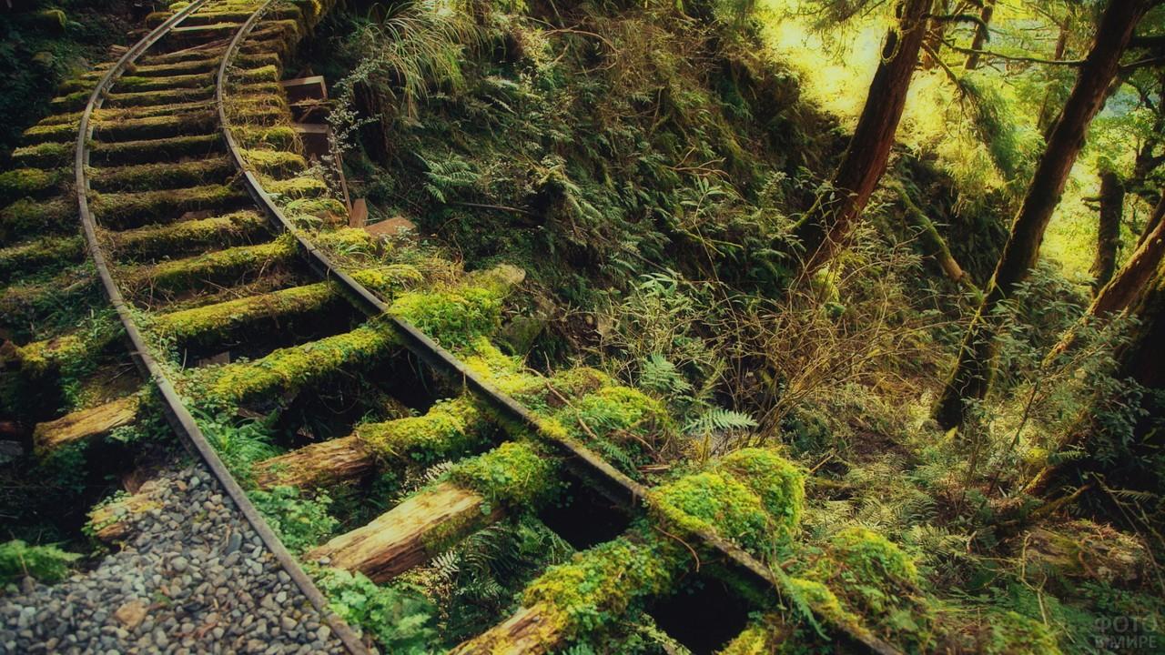 Заросшая железная дорога в лесу
