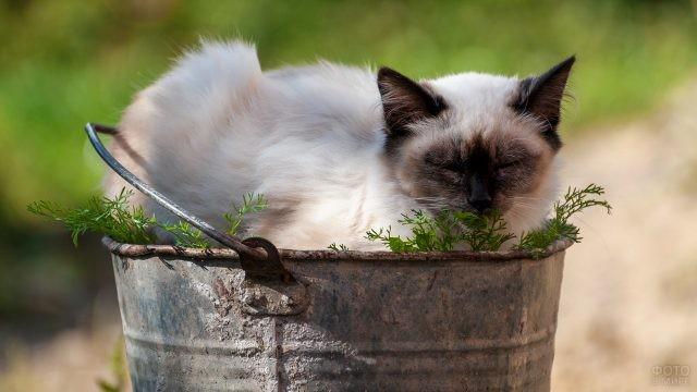 Дремлющий кот в ведре с травой