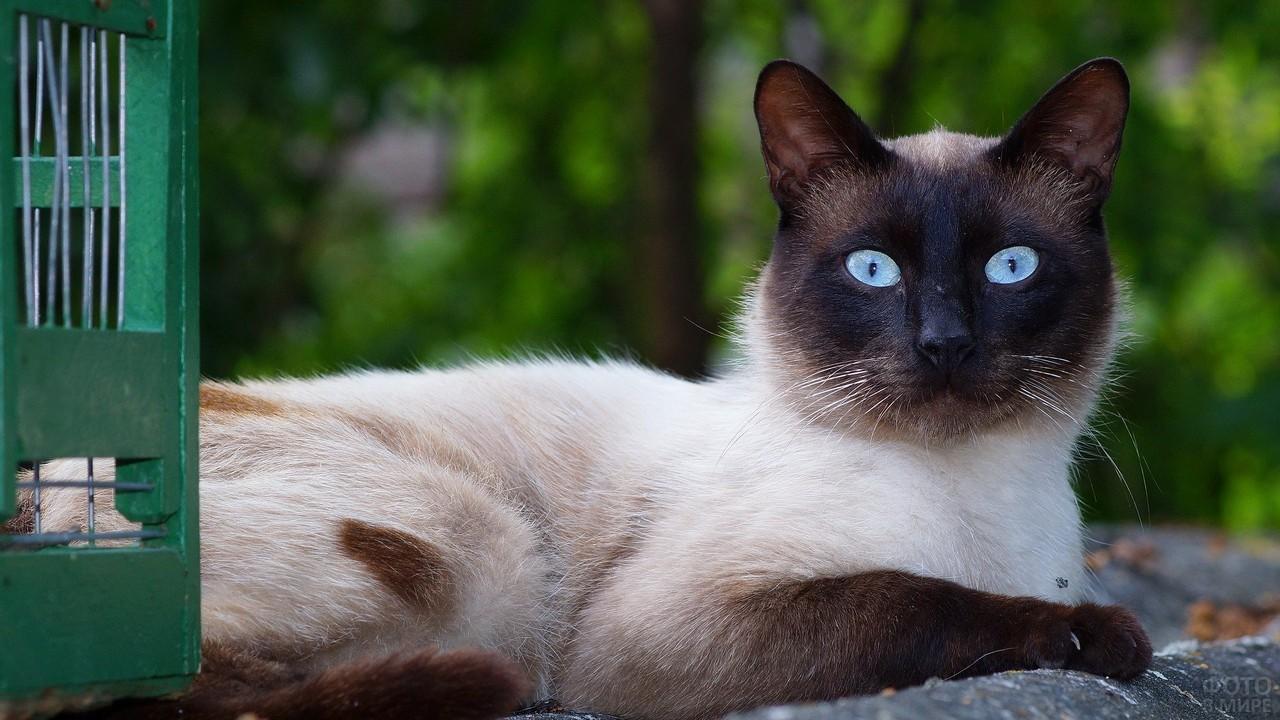 Хитрая кошка на природе