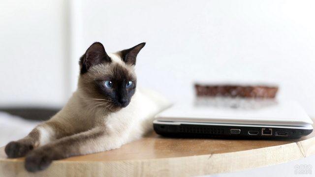 Кошка рядом с ноутбуком