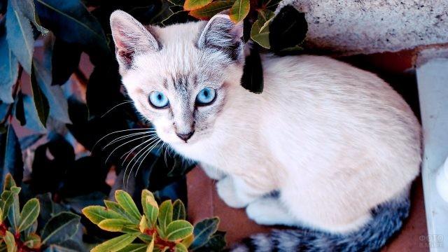 Молодая кошка среди растений