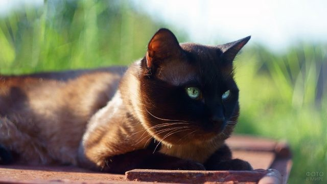 Ухоженный кот на природе