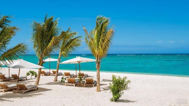 Пальмы на песочном пляже