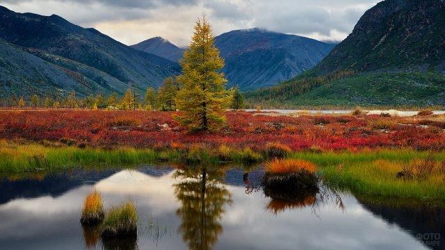 Сибирская природа в Магаданской области
