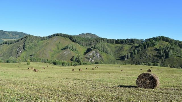 Скошенный покос с видом на горы Алтая