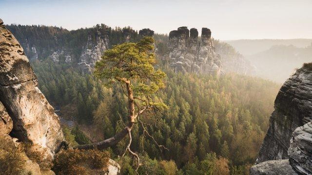 Сосна на обрыве Уральской горы