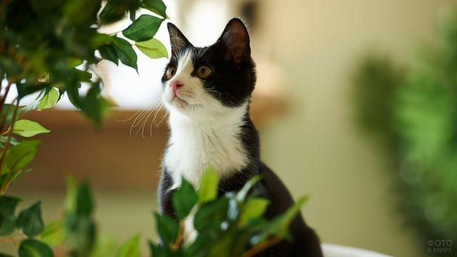Чёрно-белая кошка среди зелени