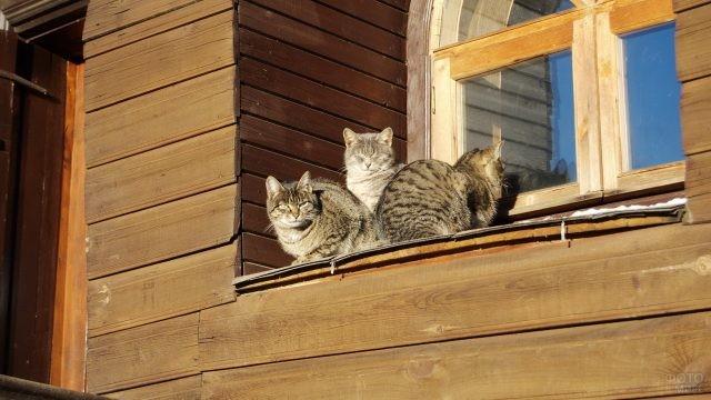 Деревенские коты на карнизе у окна
