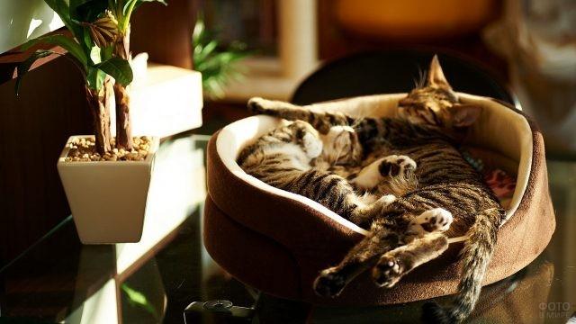Домашние кошки спят в лежанке