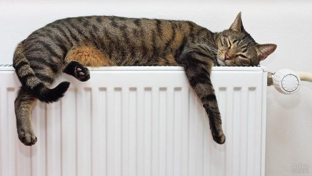 Домашний кот спит на батарее