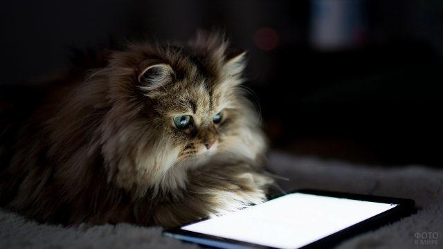 Домашняя кошка смотрит в планшет