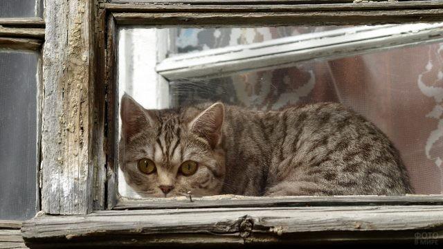 Домашняя кошка в окне старого дома