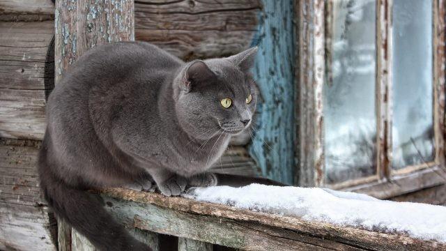 Дымчатый кот на перилах старого крыльца