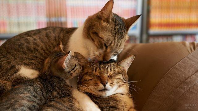 Кошачья семья в кресле