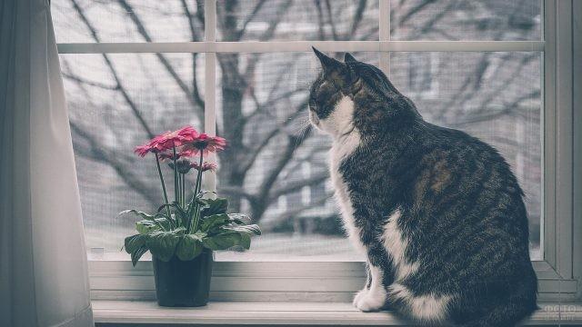Кошка на подоконнике возле горшка с цветком