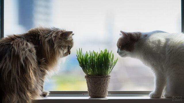 Кошки нюхают траву в горшке