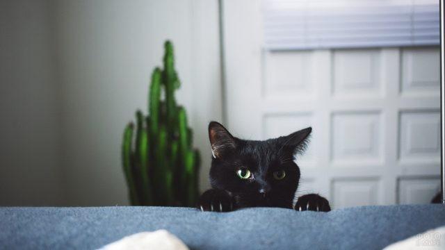 Кот-шпион выглядывает из-за дивана