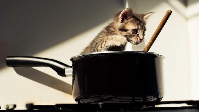 Котёнок в кастрюле на плите