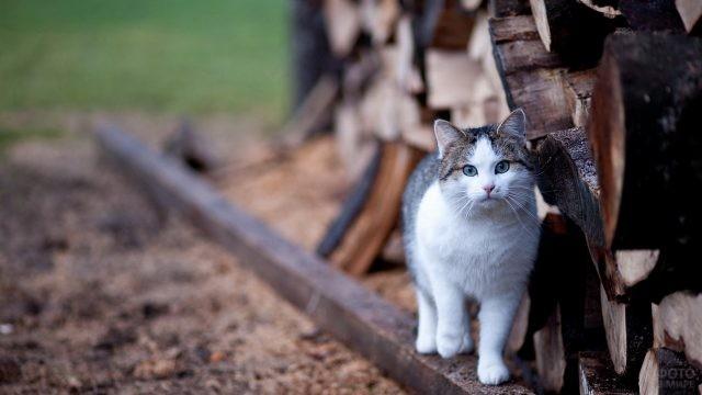 Красивый кот возле поленницы
