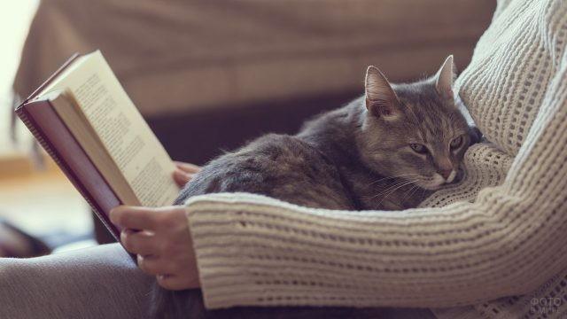 Преданный кот с читающей хозяйкой