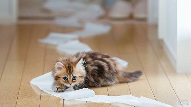 Пушистый котёнок размотал рулон бумаги