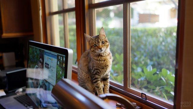 Равнодушный кот на подоконнике возле ПК