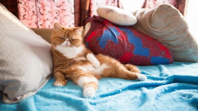 Рыжий кот развалился на кровати