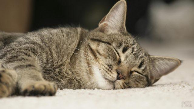Спящая кошка на светлом ковре
