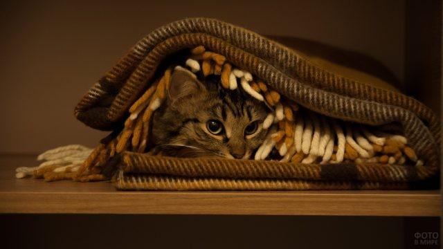 Спрятавшийся под плед домашний кот