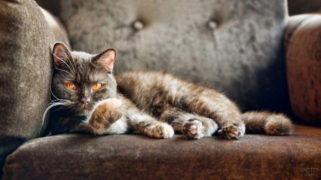 Тёмная кошка в кресле