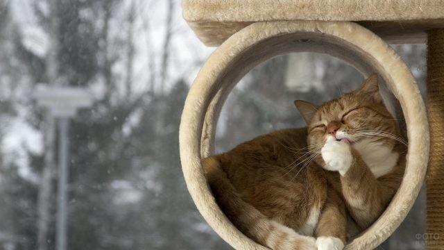 Упитанная кошка в своём городке