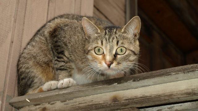 Внимательная кошка смотрит вниз