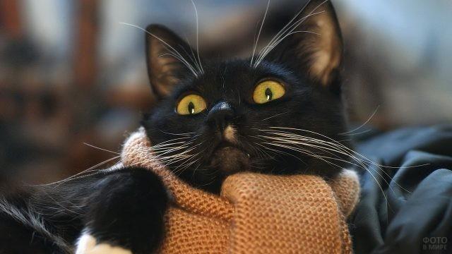 Чёрный кот в шарфе