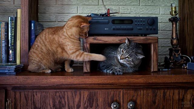 Домашние кошки играют на мебели