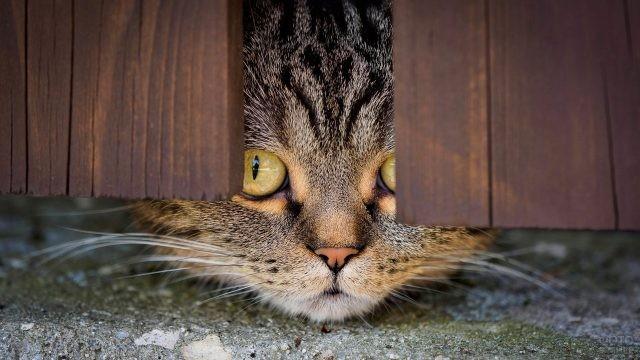 Кошка выглядывает из-под забора